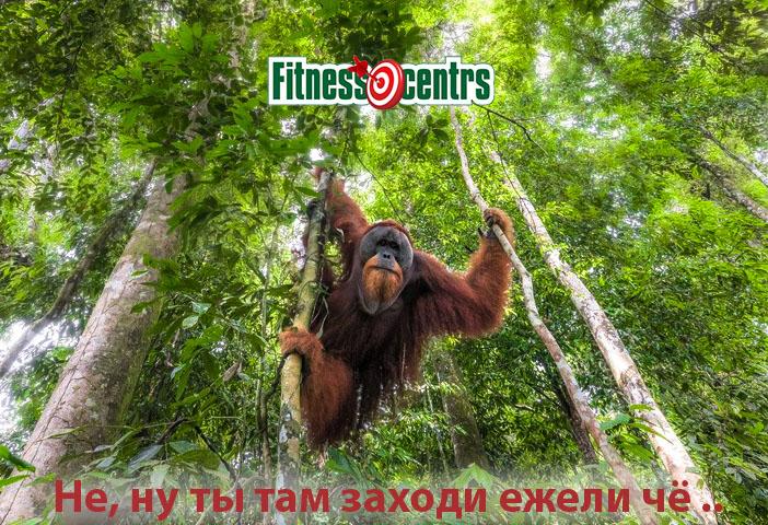 http://img.fitnes.lv/2/Fitness_centrs_8937433.jpg