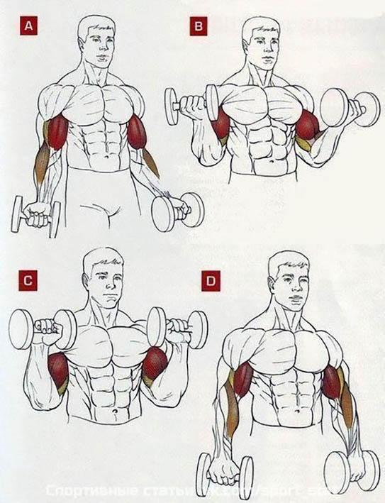 http://img.fitnes.lv/2/biceps_28289983.jpg