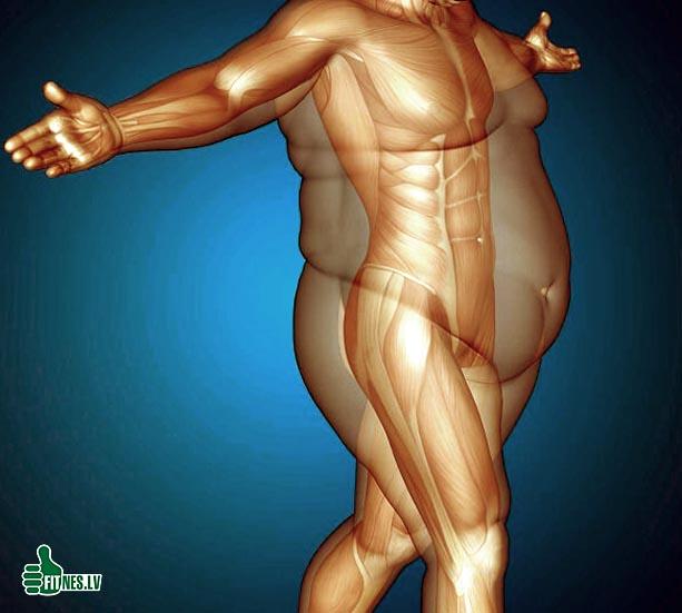 http://img.fitnes.lv/2/body_2090332.jpg