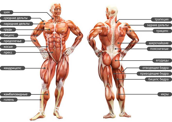 http://img.fitnes.lv/2/body_28037674.jpg