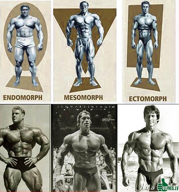 http://img.fitnes.lv/2/body_building_283667.jpg