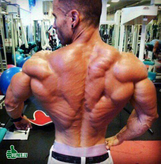 http://img.fitnes.lv/2/bodybuilding_123432.jpg