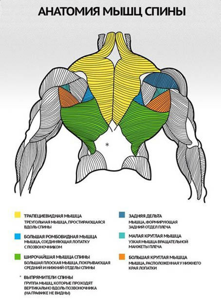 http://img.fitnes.lv/2/bodybuilding_178181726.jpg