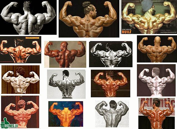 http://img.fitnes.lv/2/bodybuilding_25750944.jpg