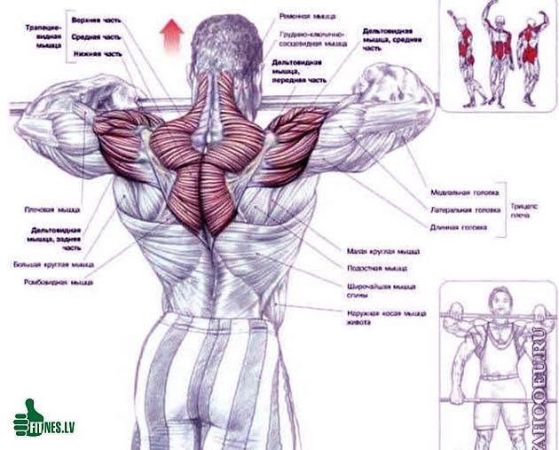 http://img.fitnes.lv/2/bodybuilding_290176589454.jpg
