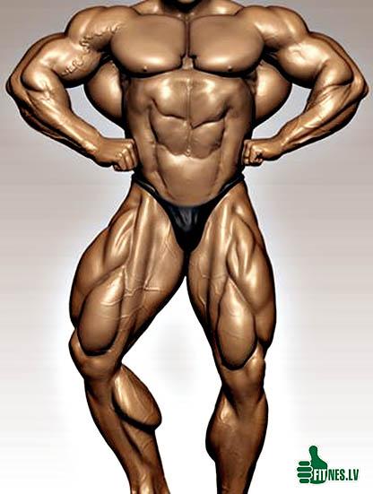 http://img.fitnes.lv/2/bodybuilding_2930978.jpg