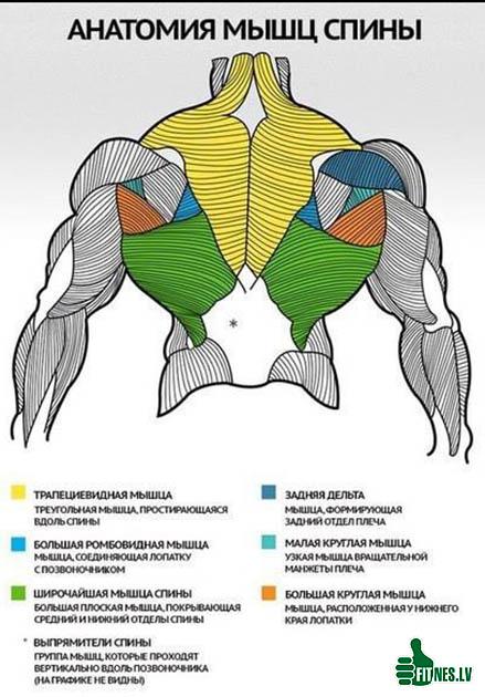 http://img.fitnes.lv/2/bodybuilding_3797522871.jpg