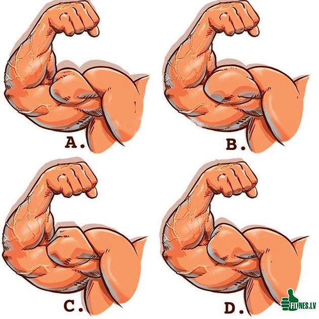 http://img.fitnes.lv/2/bodybuilding_759263683.jpg