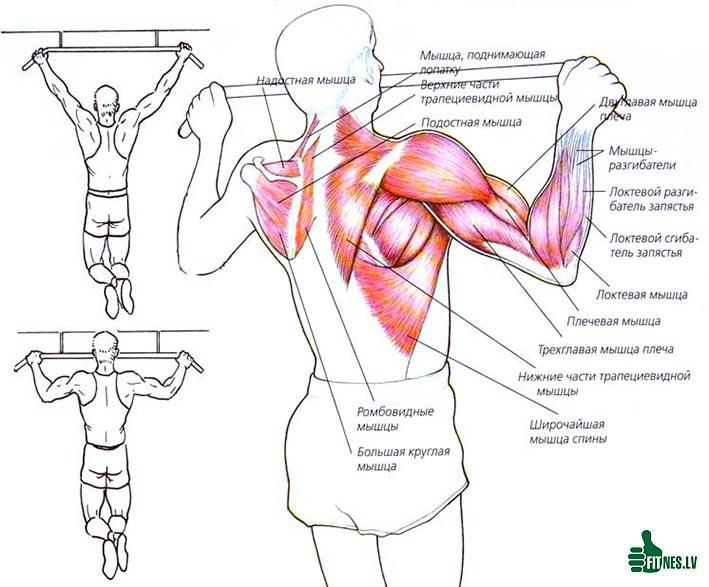 http://img.fitnes.lv/2/bodybuilding_87689975.jpg