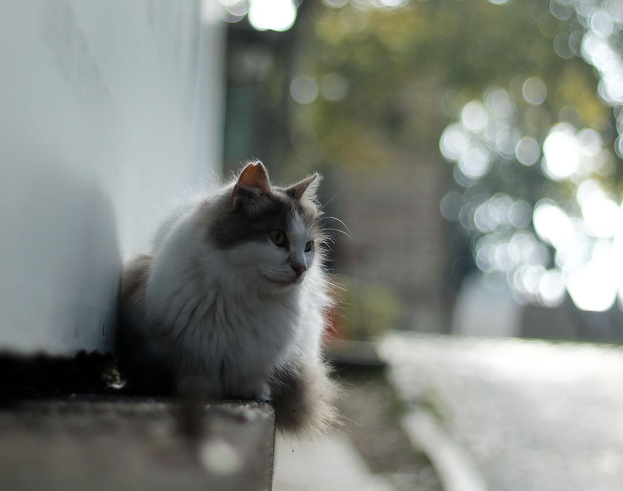 http://img.fitnes.lv/2/cat_Istanbul_278292_1742.jpg