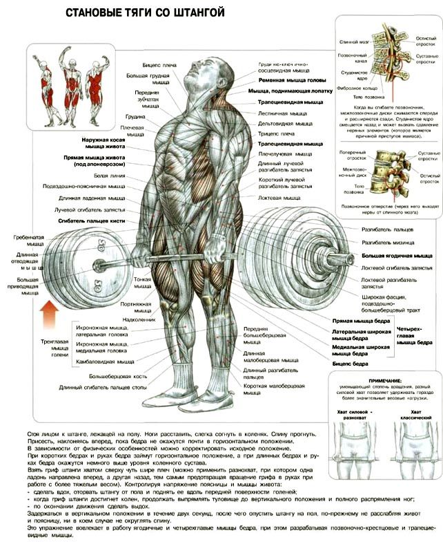 http://img.fitnes.lv/2/dedlift_9172221.jpg