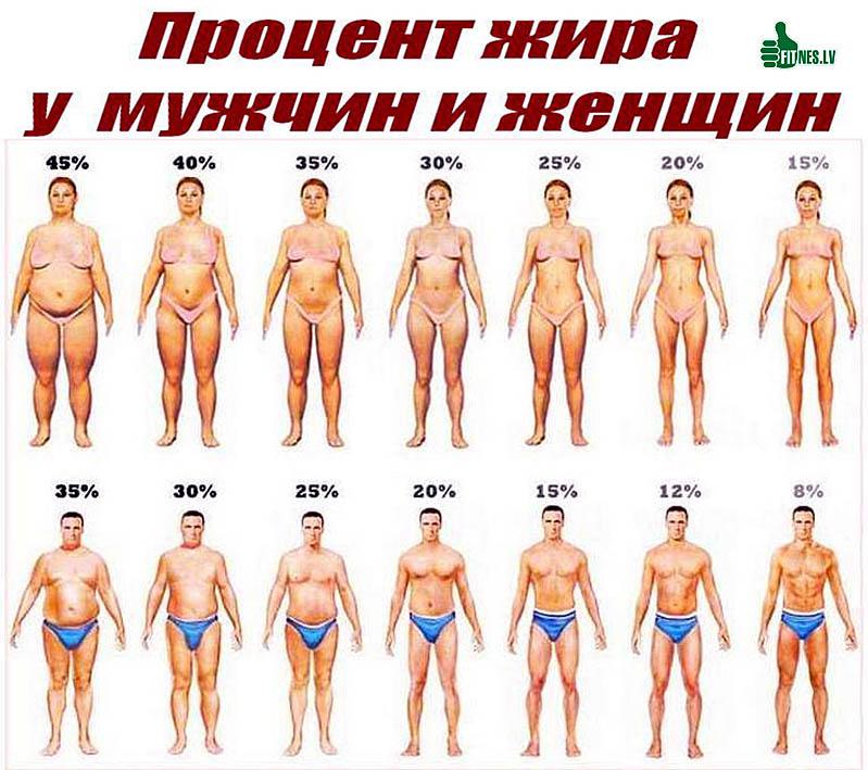 http://img.fitnes.lv/2/fat_2689936551834.jpg