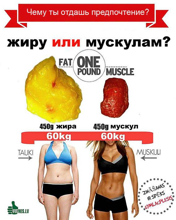 http://img.fitnes.lv/2/fat_muscle_20943.jpg