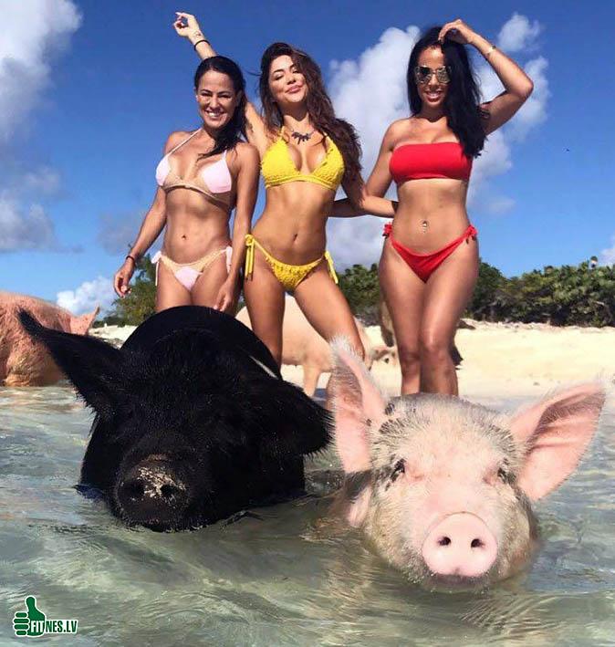 http://img.fitnes.lv/2/humour-bikini-babes-87656790097.jpg