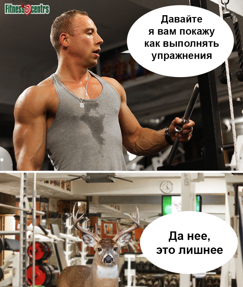 http://img.fitnes.lv/2/humour_bodybuilding_26773_2790.jpg
