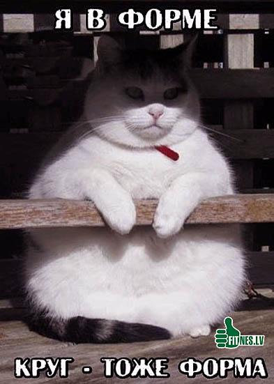 http://img.fitnes.lv/2/humour_photo-9788685.jpg