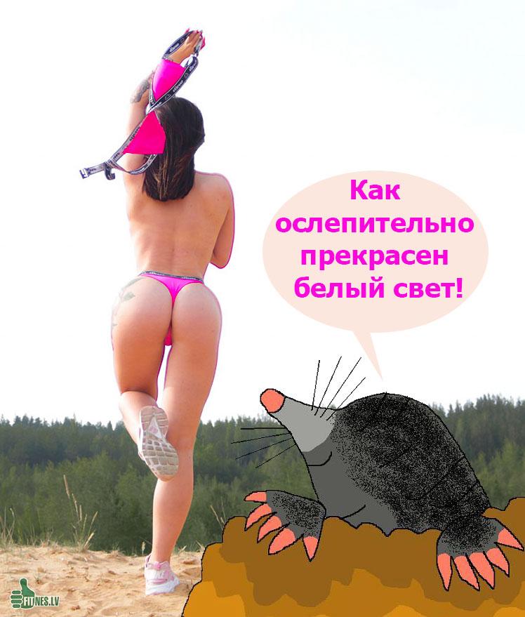 http://img.fitnes.lv/2/humour_photo_27839173.jpg
