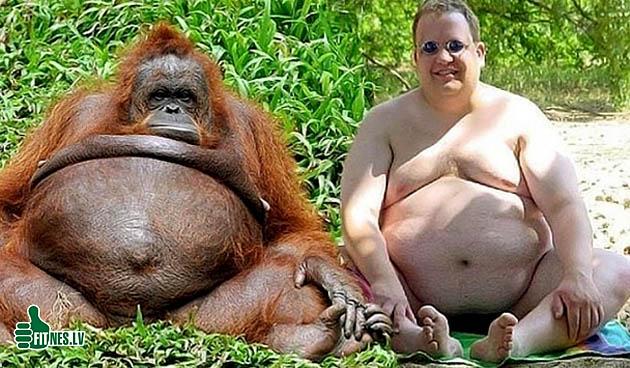 http://img.fitnes.lv/2/humour_photo_830484755.jpg