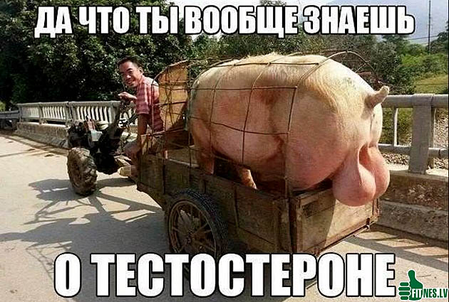 http://img.fitnes.lv/2/humour_testosteron_379897.jpg