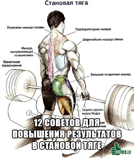 http://img.fitnes.lv/2/powerlifting_93088505.jpg