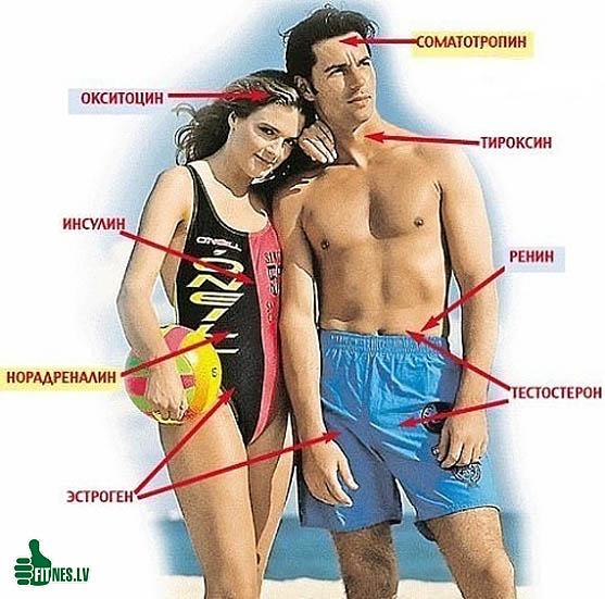 http://img.fitnes.lv/2/testosteron_83940576.jpg