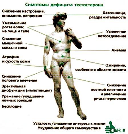 http://img.fitnes.lv/2/testosteron_890998.jpg