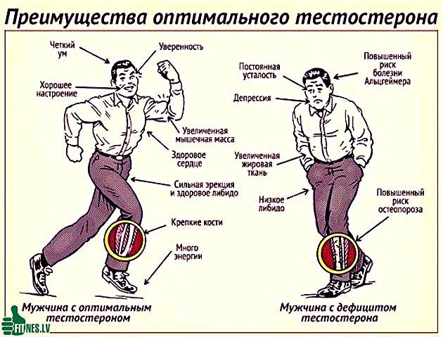 http://img.fitnes.lv/2/testosteron_9289043.jpg
