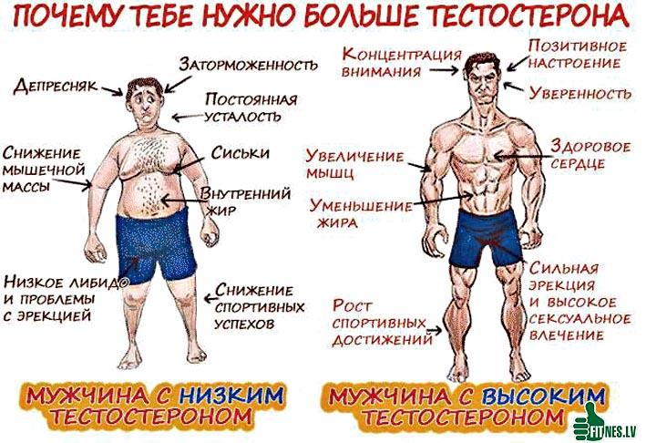 http://img.fitnes.lv/2/testosteron_9837652799.jpg