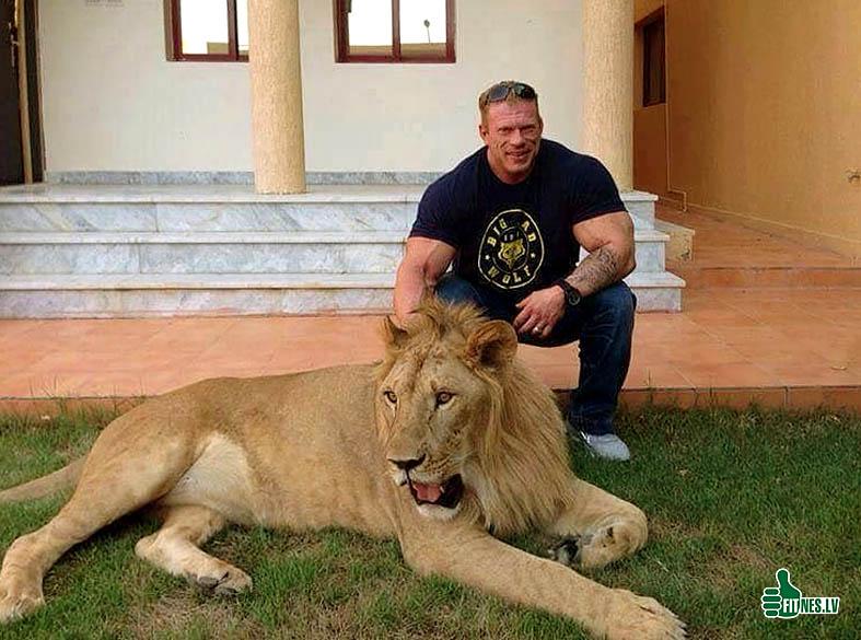 http://img.fitnes.lv/2/zoo_lion_bodybuilding_28903.jpg