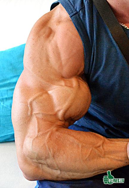 http://img.fitnes.lv/biceps_0004.jpg
