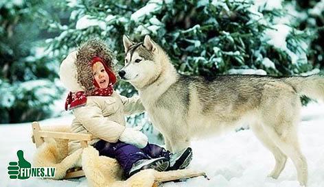 http://img.fitnes.lv/dog_48021.jpg