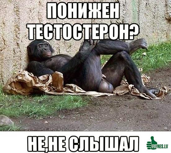 http://img.fitnes.lv/testosteron_49233.jpg
